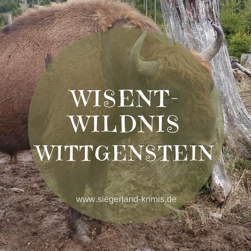 Wisent-Wildnis Wittgenstein